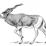 Antilope coloring page