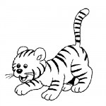 Baby tigre coloring page