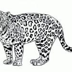 Cheetah coloring page