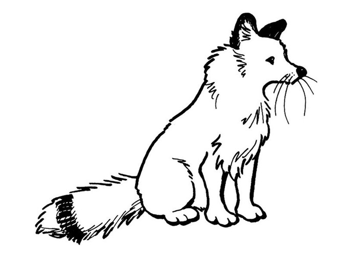 Arctic animals coloring pages