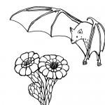 Fruit bat coloring page