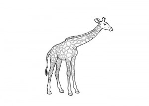 Giraff coloring page
