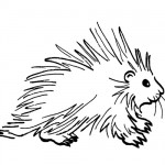 Porkypine coloring page