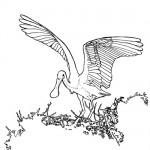 Roseata spoonbill bird coloring page