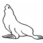 Seal coloring page