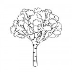 Fall tree coloring page