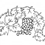 Leaves and grapes coloring page