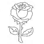 Red rose coloring page
