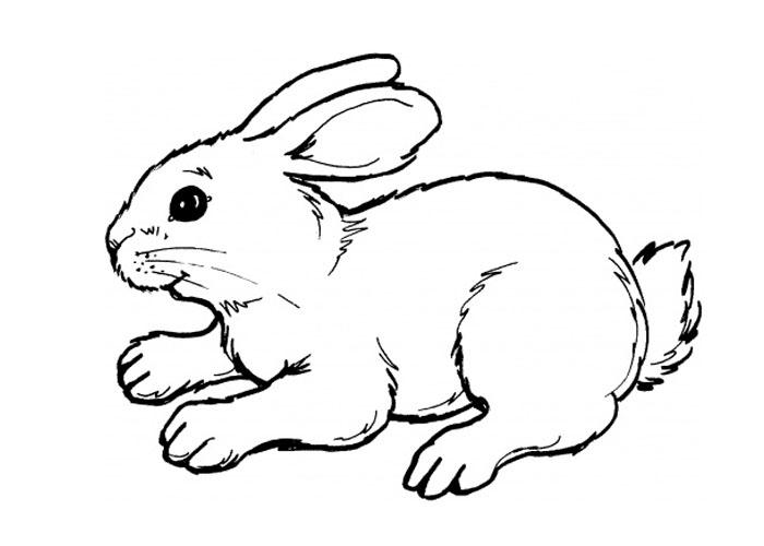 Cute bunny coloring page